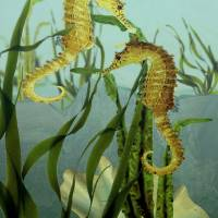 Seahorses by I.M. Spadecaller