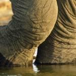 """Elephant feet"" by MichaelPoliza"