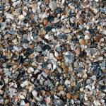 """""""little and mostly broken georgia beach shells"""" by SusanEllisonArt"""
