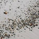 """""""shells washed up"""" by SusanEllisonArt"""