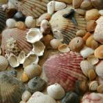 """shell collage close up"" by SusanEllisonArt"