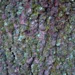 """mossy tree bark"" by SusanEllisonArt"