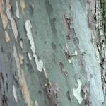 """cool gray tree texture 2"" by SusanEllisonArt"