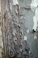 cool gray tree texture