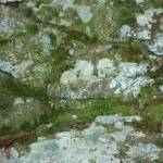"""moss covered rock and tiny fern"" by SusanEllisonArt"