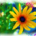 """WILD FLOWER"" by pjaysart"
