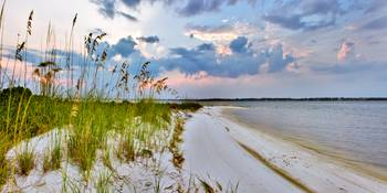 Panoramic Landscape with Green Grass and Sea Oats