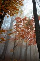 Foggy Morning in O'Bannon Woods – Take 2 Photography/Color Landscape