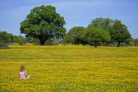 Girl in buttercup meadow