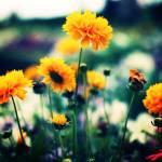 """""""Flower Pride"""" by Norah"""