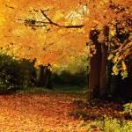 """""""Golden Autumn"""" by mindseyecreative"""