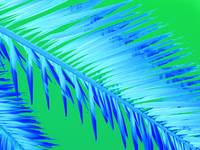 Frond Blue