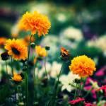 """""""Flower Pride II"""" by Norah"""