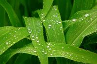 Rain Drops on Green Nature