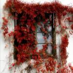 """""""Window in red"""" by bibbiw"""