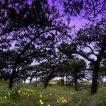 """TP trees and flowers Panorama1 copy.psd"" by scynar"