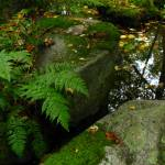 """Artesian well with fern"" by scynar"