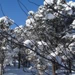 """""""Winter"""" by maj"""