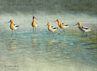 just passing through / avocets