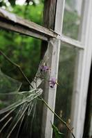 Purple flower in broken pane