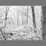 """Summer Morning in the Sacred Grove (infrared)"" by dbwalton"