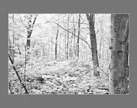 Summer Morning in the Sacred Grove (infrared)