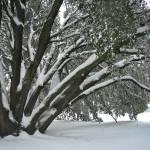 """SnowyTree_1"" by scynar"