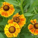 """""""Sneezeweed"""" by PuddingStoneAlley"""
