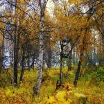 """Alaska Anchorage A Quiet Day"" by MarculescueugeniancuD60AK"