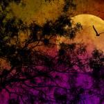 """Nocturne"" by riata66"