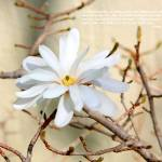 """White Flower"" by inspirationalphotocreatio"