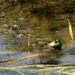 """""""Swamp Gas Boogie"""" by joelpatrick"""