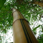 """big bamboo"" by scottphotography"