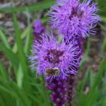 """""""purple fizzy"""" by tracyparsinen"""