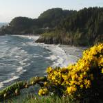 """Oregon Coast in Summer"" by DavidWhitney"