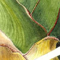 yucca Art Prints & Posters by katrin ofner ferris
