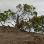 """Maui Upcountry Hillside Tree 1"" by ExpressionsOfLight"