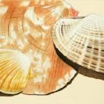 """Clam Shells"" by Glenda"