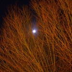 """MOONLIT TREES"" by scottphotography"