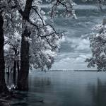 """Inside - Infrared Tree Landscape"" by miir"