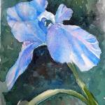 """Blue Iris"" by lindahaile"