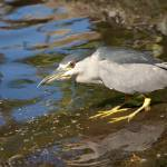 """Maui Birds"" by ExpressionsOfLight"