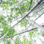 """bamboo forest 3"" by scottphotography"