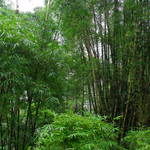 """bamboo forest 2"" by scottphotography"