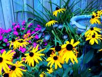 Colourful Garden 2