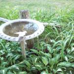 """""""birdbath"""" by Dzines"""