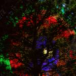 """Colorful Tree"" by lightningman"