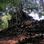 """Angkor Tree"" by davidsmart"