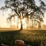 """""""252 Acorn to Oak"""" by willphoto"""