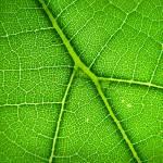 """Satellite Leaf"" by foxvox"